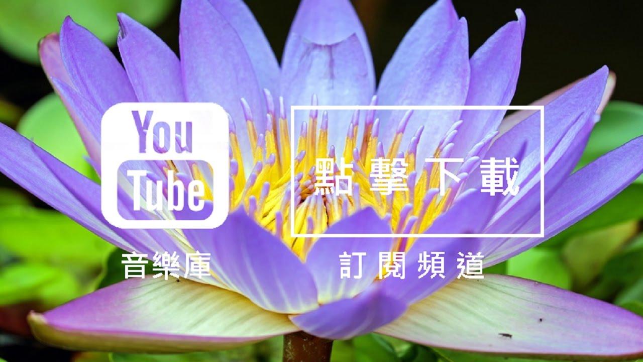 YouTube音樂庫 免費背景音樂下載 歌名: Water Lily 作者: The 126ers   Pop Music   流行音樂