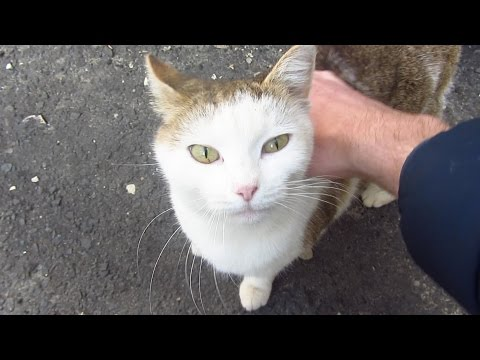Cute cat meets me on the street