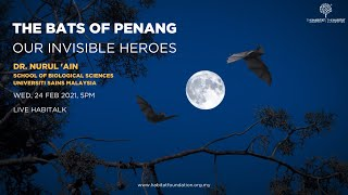 THE BATS OF PENANG: OUR INVISIBLE HEROES