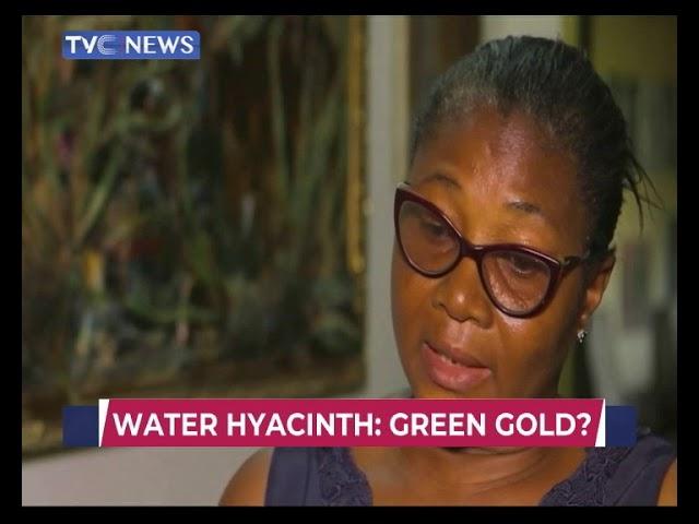 Water Hyacinth : Green Gold?