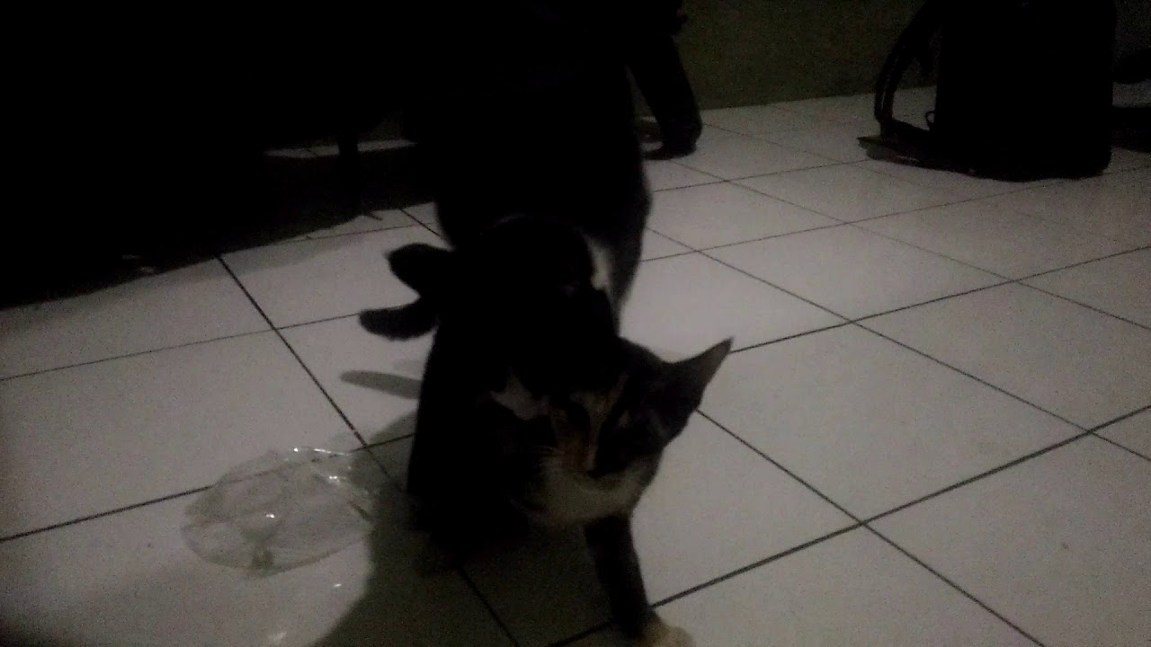 Download MiLky mEoNg
