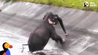 People Are So Determined To Rescue Trapped Elephant  | The Dodo