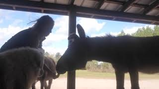 DONKEYS and building trust!