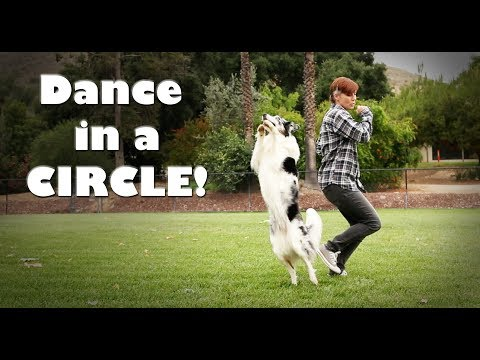 Dance in a Circle - Dog trick training