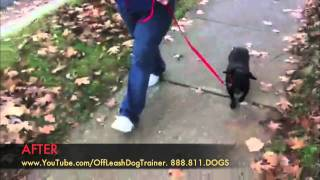 Fearful Rescue Dog Becomes Off Leash Dog Training Success. Charlotte Nc
