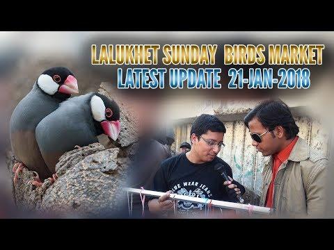 Lalukhet Sunday Birds Market Latest Update 21-Jan-2018 (Jamshed Asmi Informative Channel)