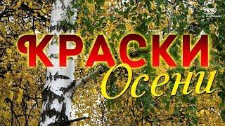 Download 🍁 КРАСКИ ОСЕНИ 🌿 Прогулка по осеннему парку под красивую воздушную МУЗЫКУ... Просто замечательно! Mp3 and Videos