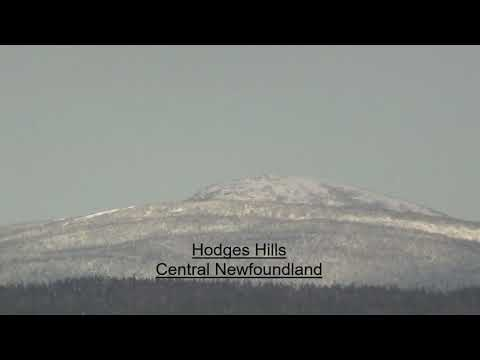 Moose Hunting October, Newfoundland 2020