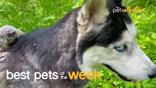 Get Off My Back   Best Pets of the Week