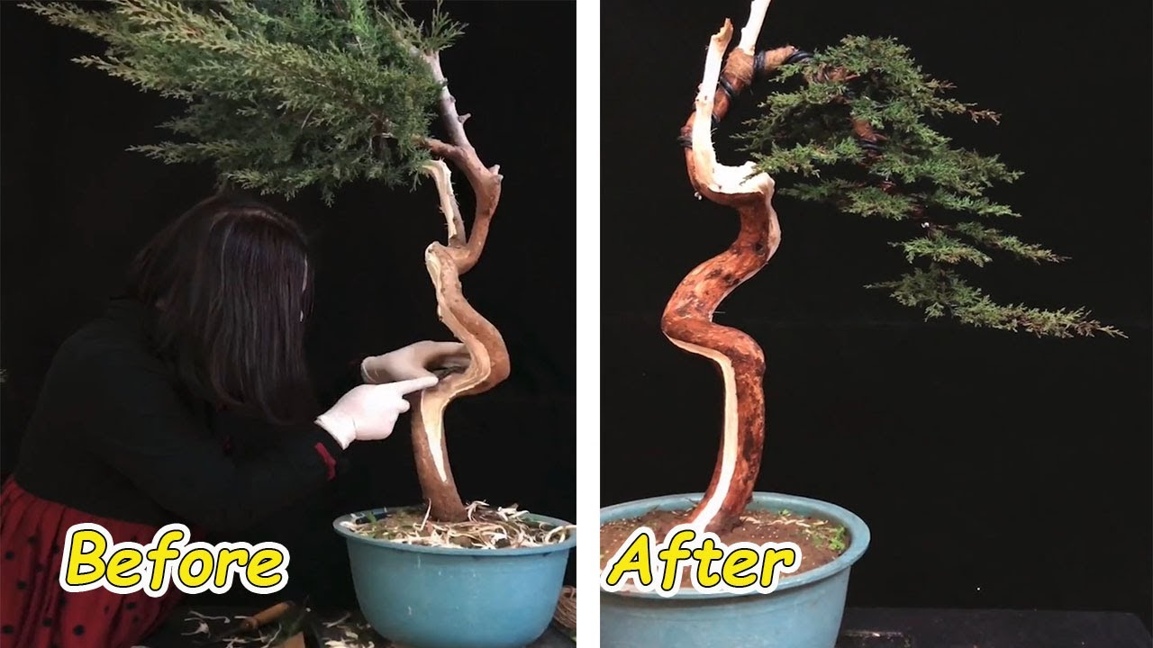 How to bend a bonsai - great bonsai bending skills #59