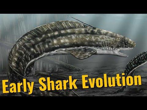 The Origin Of Sharks