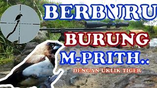 BERBURU BURUNG EMPRIT DENGAN UKLIK #1