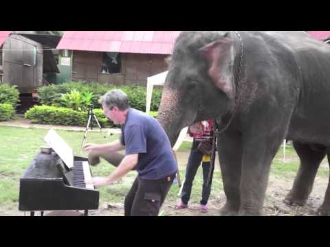 Un hombre le pone música a elefantes-lo que pasa entonces te va ASOMBRAR!