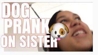 DOG PRANK ON SISTER! Lol - Vlog #3