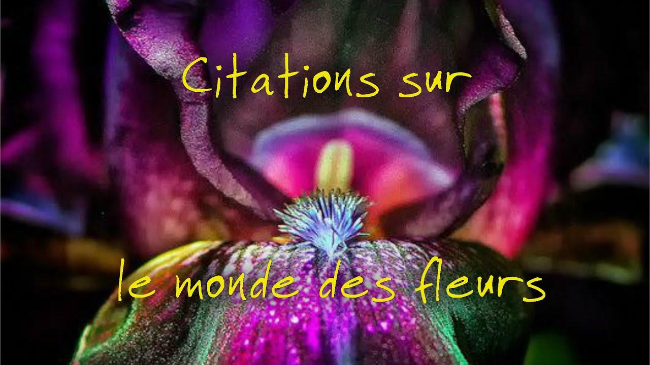 Citations sur le monde des fleurs - YouTube