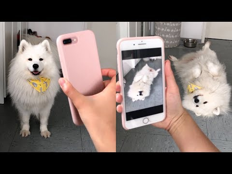 My Dog Does Tricks After Being Shown Pictures