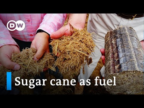 Kenya: Sugar cane as a green fuel | Global Ideas