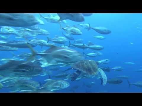 Voyage sous les Mers 3D - Film Annonce