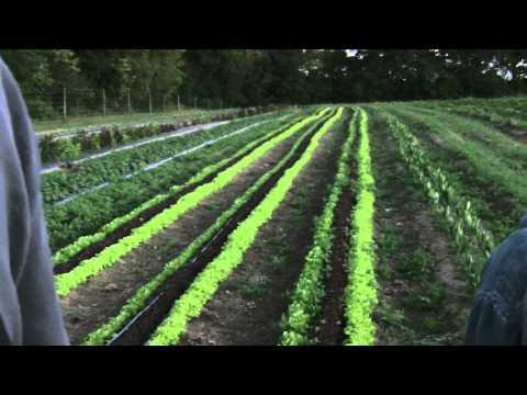 Organic Crop Production Field Trip to Cherry Grove Farm