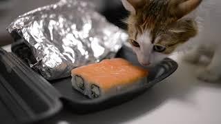 Прикол! Кошка ест суши. Смешной и милый взгляд ^^