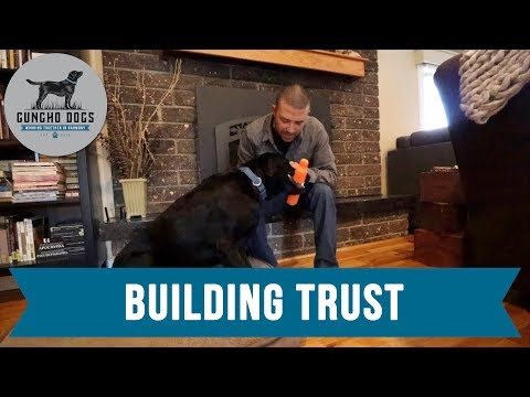 #1 Trick To Building Trust With Your Dog