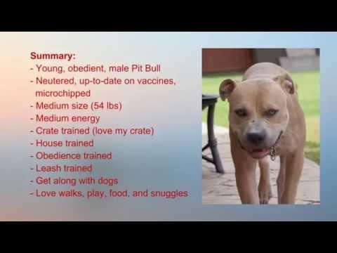 Deno - Male Pit Bull available for adoption in Atlanta, GA area