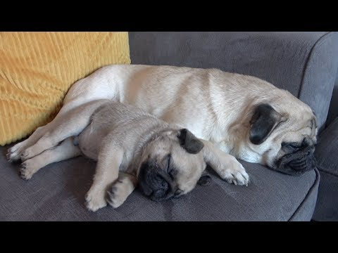 Are Pablo and Winston Best Friends Yet?