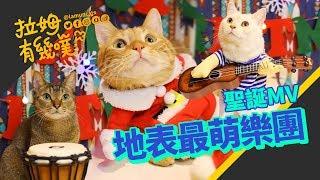 ►拉姆有幾噗◄ 貓咪樂團初登場 聖誕歌曲一起唱┃Cats band's Christmas song ⋈