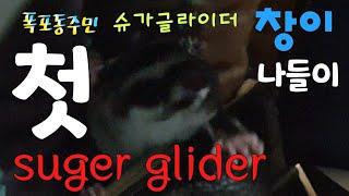 [kobo jeong] 슈가글라이더 슈가창이의 케이지 …