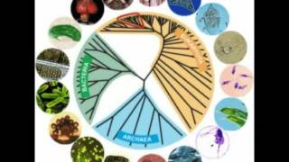 What is the Genetic Evidence for Evolution?
