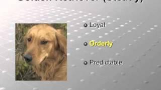 Teacher Training # 4 - Personality Types:  Golden Retriever