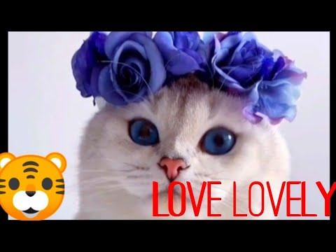 #tiktok7777#-cat-is-beautiful-and-lovely-.