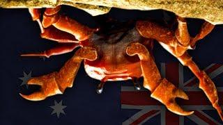 AUSTRALIAN Crab Rave!? (sᴉɥʇ ʎɐld uɐɔ sǝᴉssnɐ ʎluo)