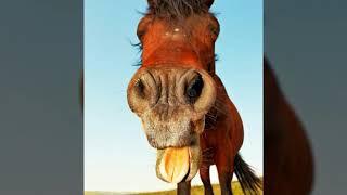 Фото смешных лошадей