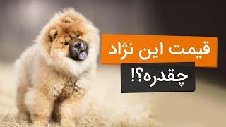 معرفی و قیمت 10 نژاد سگ محبوب