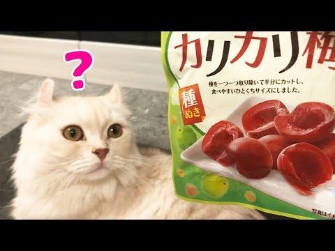 猫に調味料をかがせたらどんな表情をする?