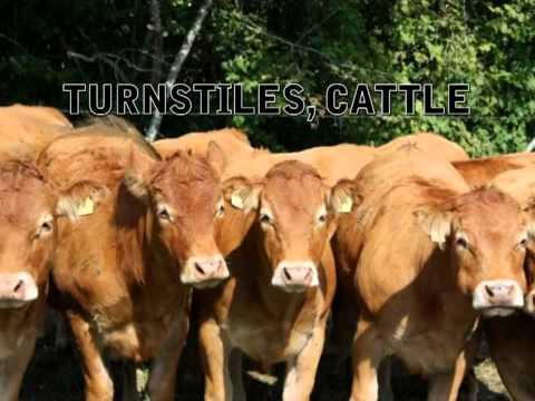 Turnstiles, Cattle