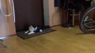 кот-вратарь