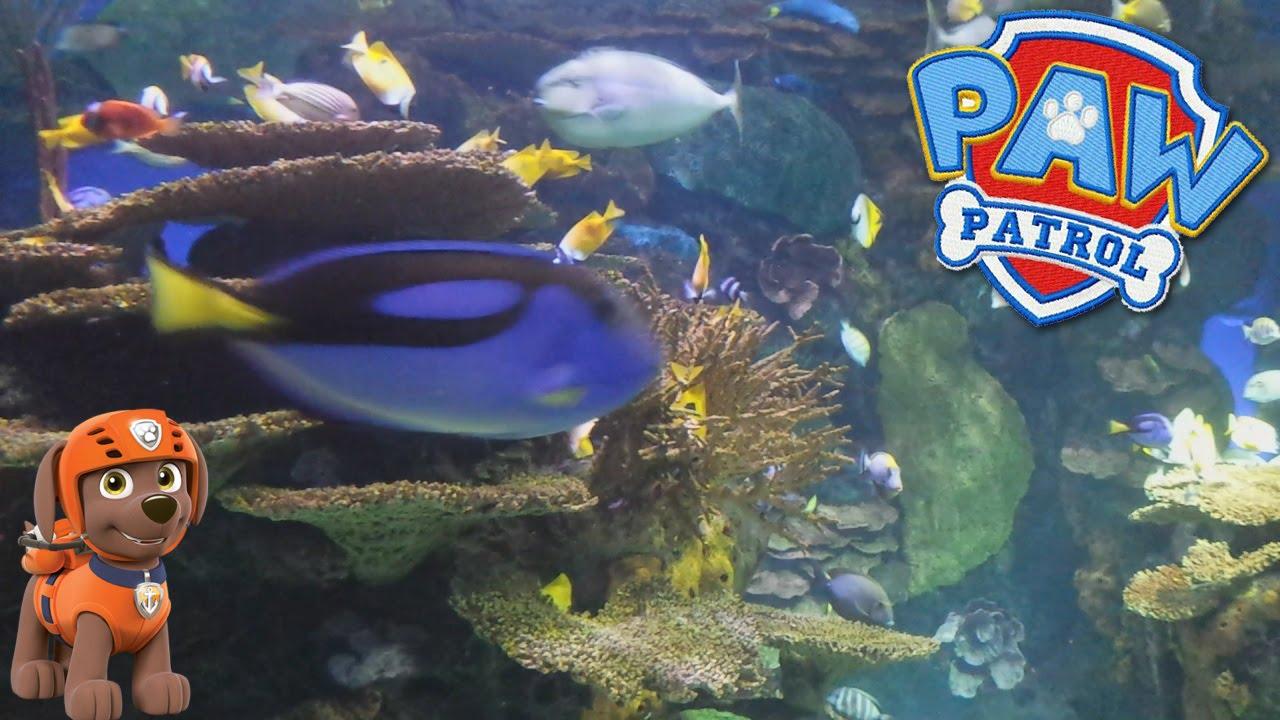 Fish in ripleys aquarium - Paw Patrol And Sharks At Ripley S Aquarium