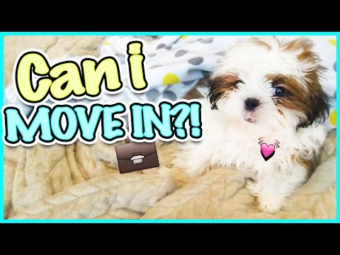 😥 JESSE IS PUPPY LOVE SICK 😥 DO THE PARENTS GIVE IN?! SMELLY BELLY TV VLOGS