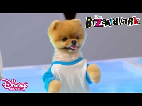 Bizaardvark - Paige and Frankie's Guide to Life - Jiffpom | Official Disney Channel Africa