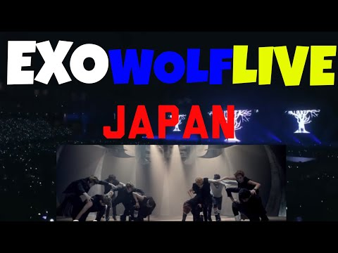 BLACK GUY REACTS TO: EXO- Wolf The EXO'rDIUM IN JAPAN LIVE