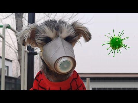 Китайский коронавирус животные опасности за 7 февраля