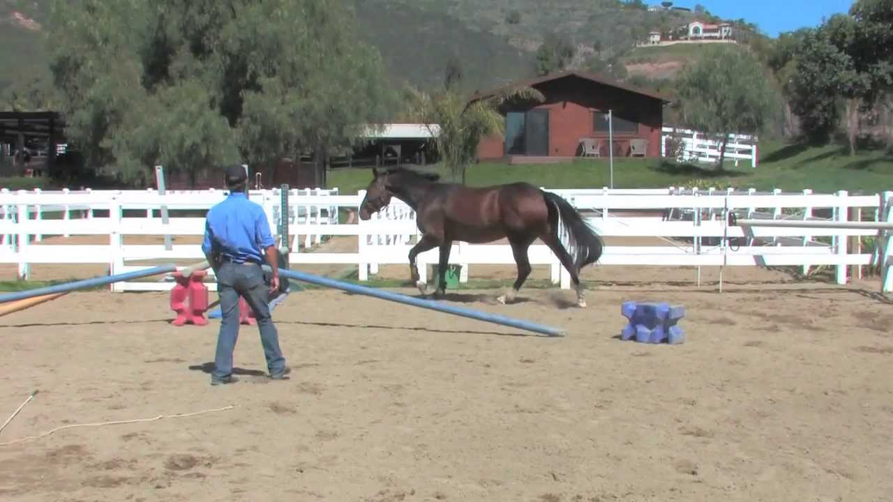 Learn How To Free Jump Your Horse Youtube