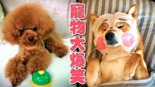 動物爆笑影片,不信你不笑~????【寵物短片集】