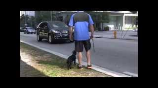 Dog Training- Heel & Come Dvd Is Almost Completed