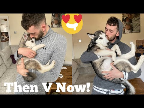 Scared Puppies First 3 Months In New Home Is The Cutest Ever!! [UNSEEN CLIPS] [RUPERT PROTECTS!!!]