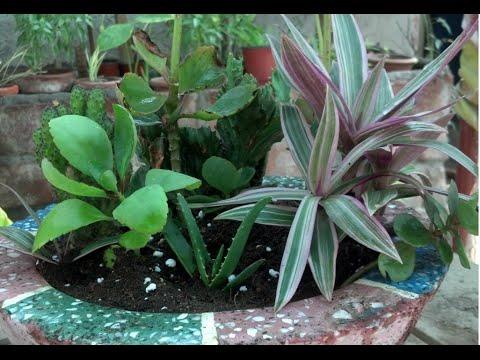How To Dish Gardening Dish Gardening Design Cactus Bowl Garden Mesmerizing Dish Gardens Designs