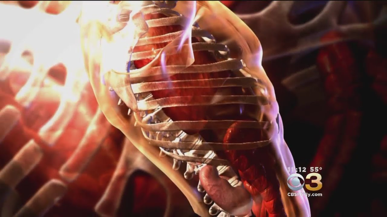 scientists find a new organ in humans the interstitium youtube