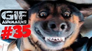GIF Анимация. ПОДБОРКА ВИДЕО ПРИКОЛОВ 2016 # 35. ПРИКОЛЫ ВИДЕО